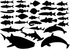 Fish vector set. Fish set, vector black illustrations on white background Royalty Free Stock Images