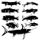Fish vector silhouettes. Freshwater and saltwater fish in vector silhouette with stylized illustration Stock Photos