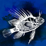 Fish vector watercolor image hand drawn. Ink Royalty Free Stock Images