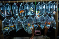 Fish Vendor stock photo