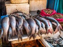 Fish Vendor in Nepal Stock Images