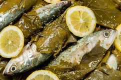 Fish in vine leaves Stock Photos