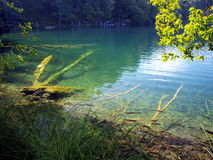 Fish visible in clear water, blue lake in Plitvice, Croatia Stock Image