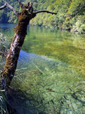 Fish visible in clear water, blue lake in Plitvice, Croatia Royalty Free Stock Photography