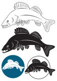 Fish walleye Royalty Free Stock Photos