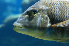 Fish in the water. A fish in the clear water royalty free stock photos