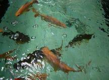 FISH. In water BLUR defocus Stock Photo