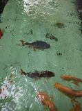 FISH. In water BLUR defocus Royalty Free Stock Photo