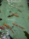 FISH. In water BLUR defocus Stock Photos