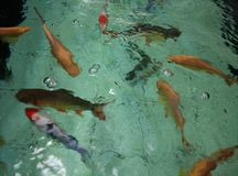 FISH. In water BLUR defocus Stock Images