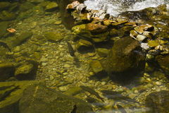 Fish in water fall. Fish swimming in water fall Royalty Free Stock Photos