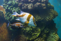Fish in the water. Fish in a fishtank - animal photography stock image