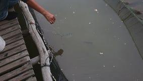 Fish water jet knocks feed stock video