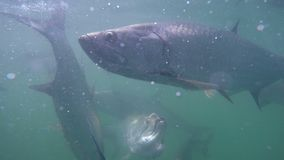 Fish in the water stock video footage