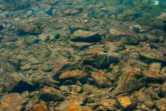 Fish in water view through the water from above. Transparent wat Royalty Free Stock Photo
