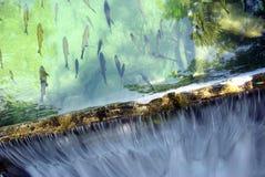 Fish and waterfall Stock Photos