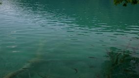 Fish in waters of Plitvice Lakes National Park. View of Plitvice Lakes National Park stock video footage