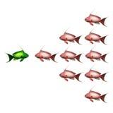 Fish on white background. Fish confrontation on white background Royalty Free Stock Photography