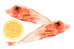 Fish On White Background Stock Images