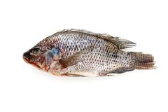 Fish on White background Stock Photography