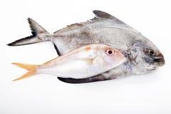 Fish  on white background Stock Photography