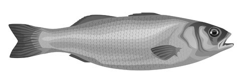 Fish. On a white background Royalty Free Stock Photos
