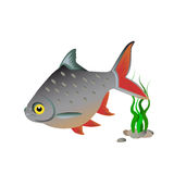 Fish on a white background. Vector fish on a white background with algae and pebbles Royalty Free Stock Photos