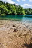 Fish and wild duck swims in the lake in the woods. Plitvice, National Park, Croatia stock photos