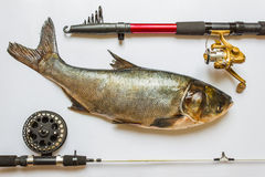 Fish With Rods And Tackle Stock Images