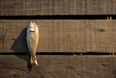 Fish on wood Stock Photography