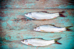Fish on wooden background Royalty Free Stock Photos