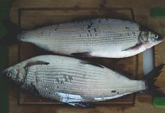 2 fish on a wooden board royalty free stock image