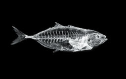 Fish x ray Stock Image