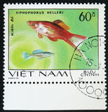 Fish Xiphophorus helleri, stamp is from the series, circa 1980. MOSCOW, RUSSIA - JANUARY 7, 2017: A stamp printed by Vietnam shows fish Xiphophorus helleri royalty free stock image