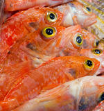 Fish yellow eye Stock Image
