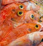 Fish yellow eye Stock Image