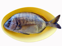 Fish in Yellow Plate Royalty Free Stock Photo