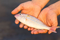 Fish for you Stock Photography