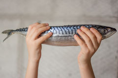 Fish in your hands Stock Photos