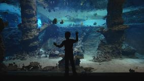 Fish zoo life, small boy considering fish in big underwater tank with marine nature in clear water stock footage