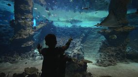 Fish zoo oceanarium, small children boys look fish and stingrays floating in large aquarium with marine nature in clear stock video footage