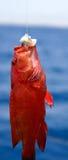 fish1 Стоковая Фотография
