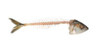 Fishbone Стоковые Фотографии RF