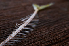Fishbone Fotografia Stock Libera da Diritti