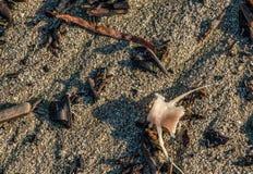 Fishbone in het zand royalty-vrije stock foto's