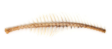 Fishbone Royalty Free Stock Photography