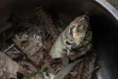 Fishbone of mackerel fish in a bowl Royalty Free Stock Photos