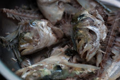 Fishbone of mackerel fish in a bowl Stock Photo