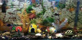 fishbowl photo stock