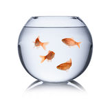 Fishbowl Royalty Free Stock Images